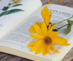 flowers, books, and yellow image