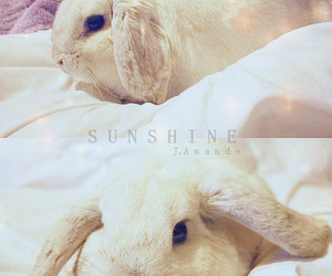 lapin, photography, and pet image