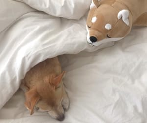 aesthetic, dog, and beige image