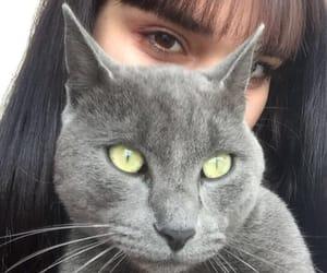 bangs, cat, and eyes image