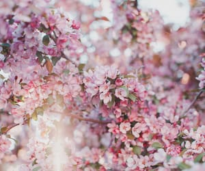 allah, blossom, and cherry image