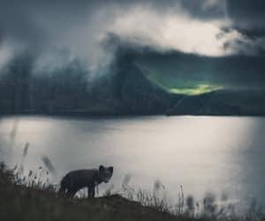 aurora borealis, fox, and photography image