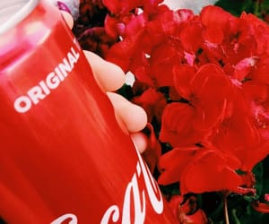 aesthetic, red, and coke image