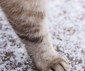 animals, cats, and snow image