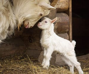animal and farm image