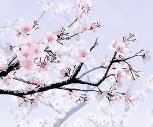 anime, art, and blossom image