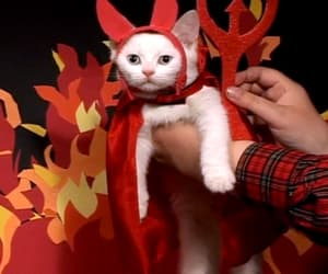 cat, costume, and Halloween image