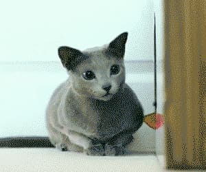 awesome, funny, and gif image