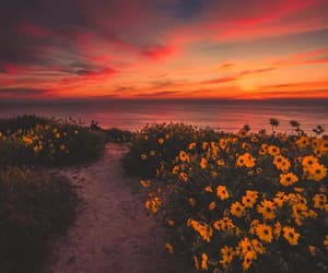 flowers, sunset, and photography image