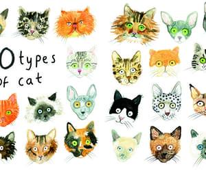 art, artsy, and cats image