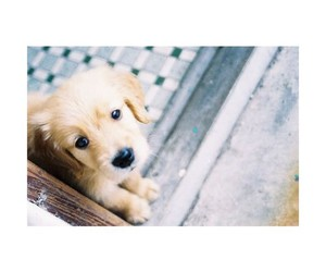 cute animals, sweet, and cute dogs image