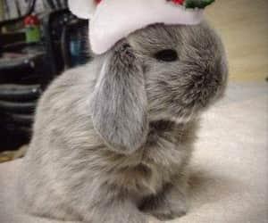 bunny, christmas, and cute image
