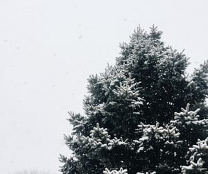 trees and winter image