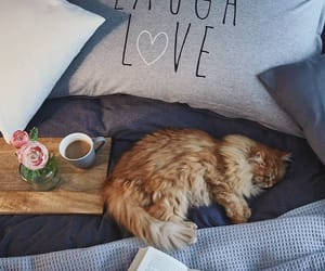 animal, cozy, and love image