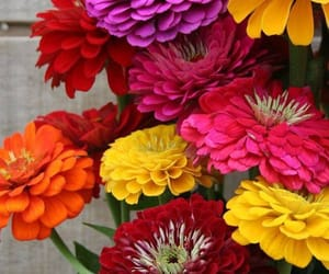 belleza, colores, and flores image
