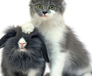 rabbit and cat image