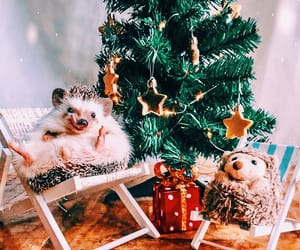adorable, animals, and xmas image