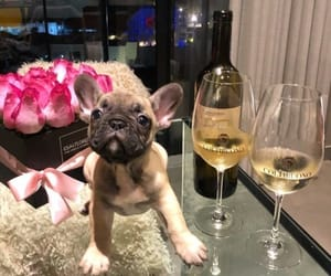 champagne, pink, and pug image
