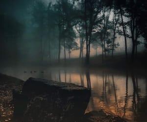 dark, nature, and woods image