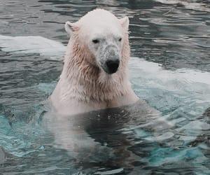 Let's take a swim