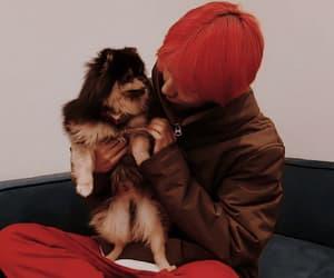 jin, k-pop, and pets image