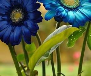 azul, naturaleza, and belleza image