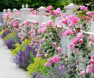 Backyard flower garden pink.