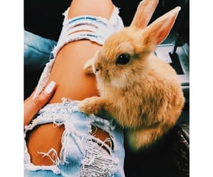 conejo, love, and rabbit image