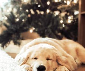 animals, dog, and christmas image