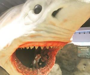 fort lauderdale, tiburon, and sobrino image