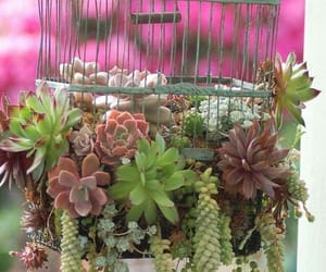 garden, plants, and succulents image