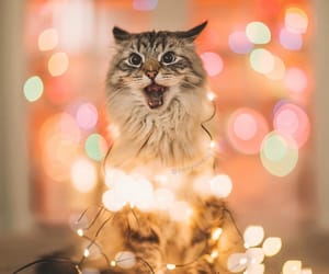 christmas, lights, and cat image