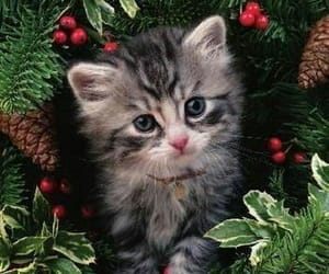 Animales, felino, and gato image