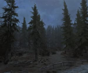 dark, forest, and night sky image