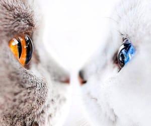 beautiful, cat, and eye image