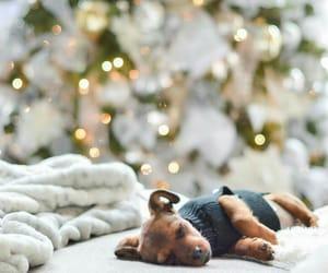 blanket, christmas, and dog image