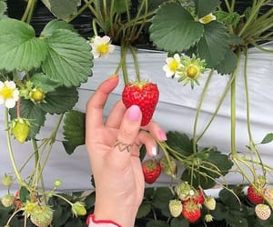 aesthetic, strawberry, and flowers image