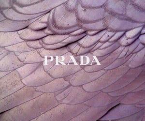 aesthetics, Prada, and quote image