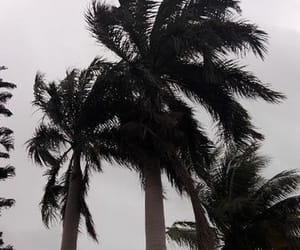 aesthetic, nature, and palmtrees image