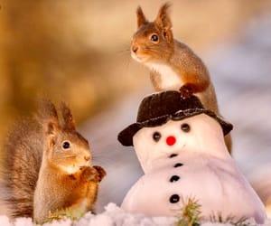 snow, snowman, and squirrels image