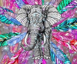 animals, feathers, and sparkles image