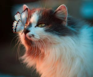 animal, cat, and butterfly image