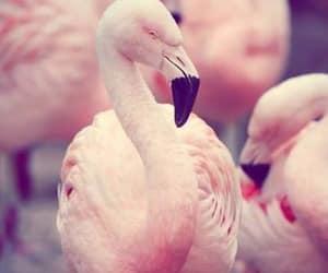 pink flamingos image