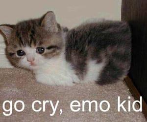 cat, meme, and emo image