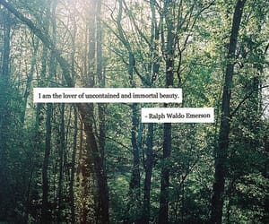 forest, quote, and travel image