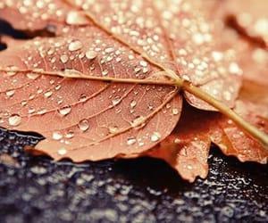autumn, photo, and leaf image