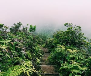 hawaii, hike, and Honolulu image