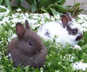 animals, cute, and kawaii image