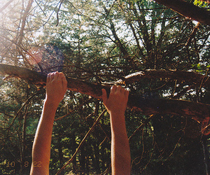 hands, photography, and tree image