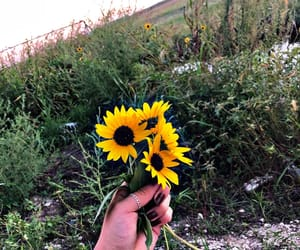favorite, 🌻, and flowers image